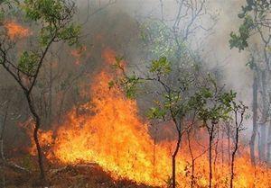 آتش در جنگل های توسکستان گلستان ۴ روزه شد/ تجهیزات نیست !