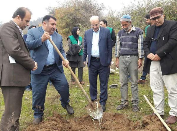 100 هکتار از اراضی شیب دار کردکوی باغ می شود