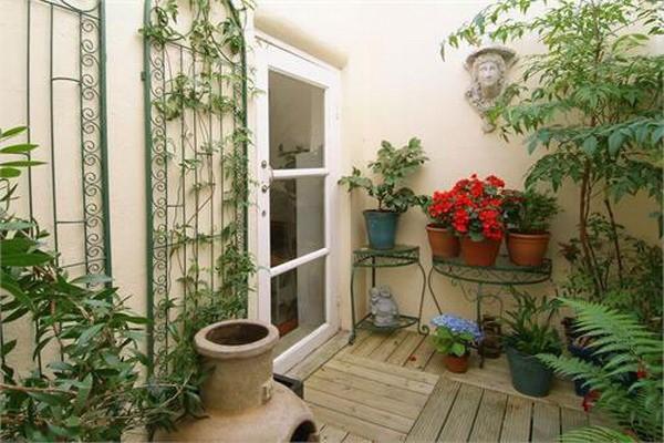 این گیاهان هوای منزل شما را تصفیه می کنند