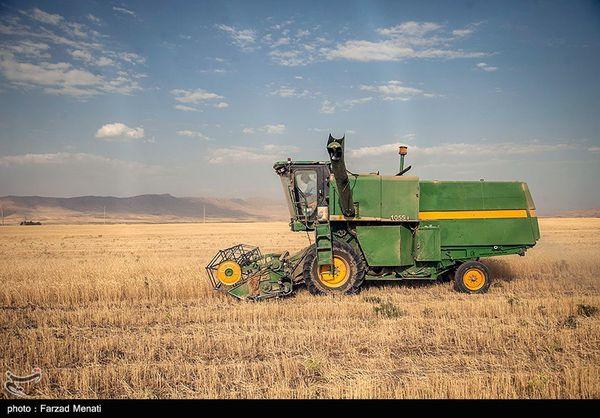 عضو کمیسیون کشاورزی مجلس: دولت بدون هماهنگی شورای قیمتگذاری قیمت گندم را تعیین کرد