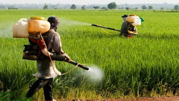 اختلاط نامناسب سموم کشاورزی؛ بلای جان مزارع گلستان
