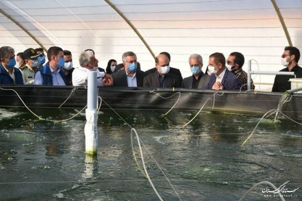 بازدید استاندار گلستان از اولین پروژه پایلوت پرورش متراکم میگو در بندرترکمن