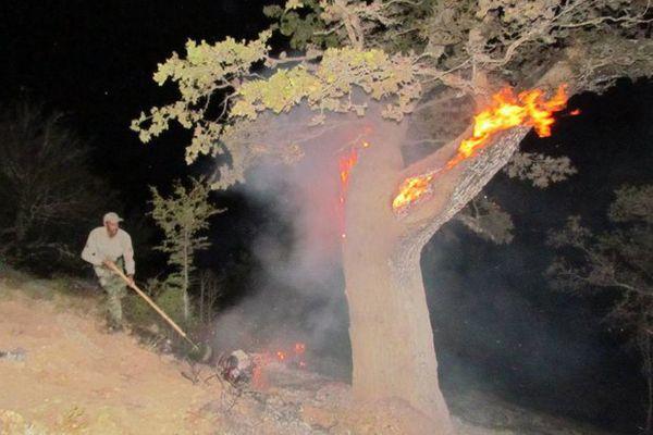 آتش سوزی در جنگل ابر صحت ندارد