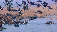 شکارچیان ۱۳ مرغابی وحشی در تالاب صوفیکم آققلا دستگیر شدند