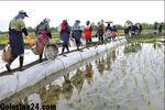 دستمزد ۲۰۰ هزار تومانی برنج کاران