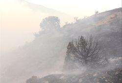 آتش در جنگلهای شهرستان گالیکش مهار شد