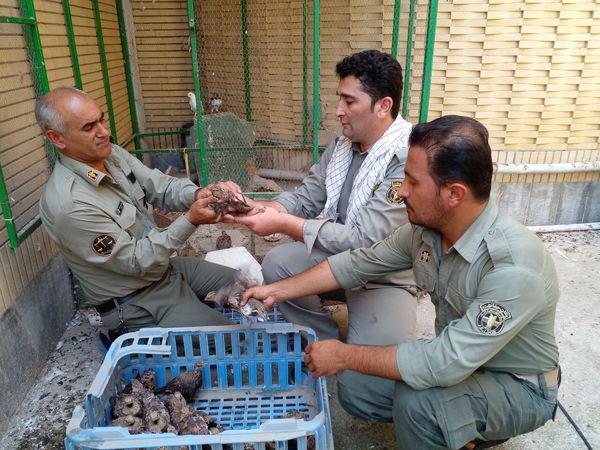 کشف ۳۵ پرنده وحشی غیرمجاز از یک شکارچی در بندرترکمن