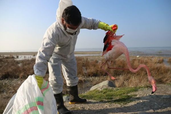 پسروی و کیفیت آب خلیج گرگان باید به طور ریشه ای حل شود