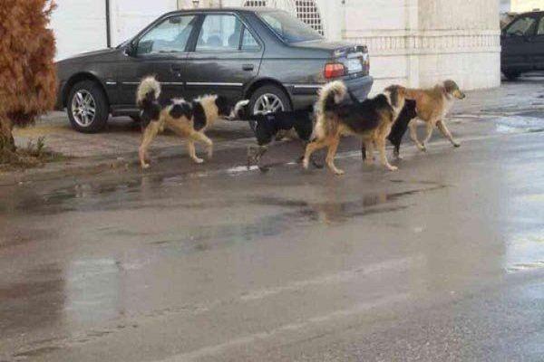 سگ های ولگرد مشکل همیشگی شهر ها