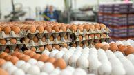 توزیع تخم مرغ ارزان شروع شد + قیمت و محل توزیع