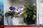 نمایشگاه گل و گیاه گرگان در لنز گلستان24(قسمت دوم):