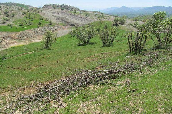 لزوم رعایت تناوب زراعی برای افزایش تولید محصولات کشاورزی