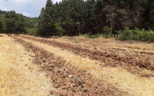 طرح آتشبُر در ۳۵۰ کیلومتر از نوار جنگلی گلستان اجرا شد