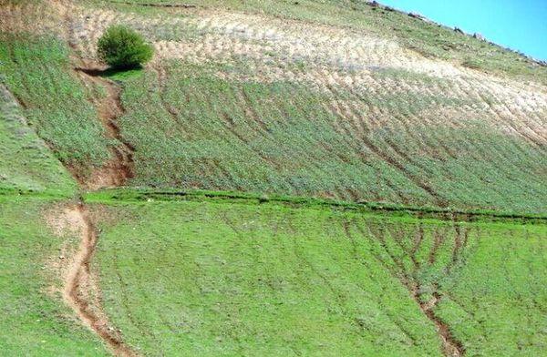 بازگرداندن بیش از ۱۵ هزار متر مربع زمین به منابع طبیعی