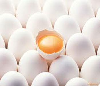 سالانه بیش از 28 هزار تن تخم مرغ در استان تولید می شود