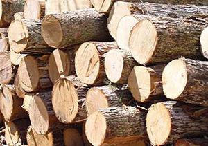 کشف چوب قاچاق در رامیان