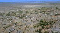نمونهبرداری از ماهیان تلفشده خلیج گرگان به پایان رسید