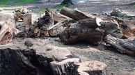 علت قطع درختان پارک جنگلی النگدره گرگان