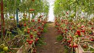 شهرکهای گلخانهای در گلستان با شیرینسازی آب دریای خزر راهاندازی میشود