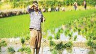 پیچ و خمهای طرح «کشاورز_کارت» راه را برای مشکل نقدینگی کشاورزان هموار نکرد/ وعدههای نافرجام مسوولان علاج درد کشاورزان نیست