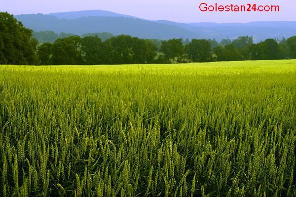 سر شماری عمومی کشاورزی