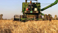 طلب ۵۰۰ میلیارد تومانی کشاورزان گلستانی از دولت؛ پیگیری استانی پاسخ نداد