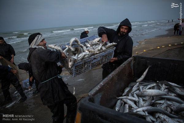 عکس/ فصل ماهیگیری دریای خزر