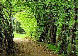 موفقیت سال نخست اجرای طرح تنفس جنگل ها ی کشور
