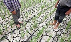 افت تولیدات زراعی ثمره سدهای خالی/بیآبی کشت تابستانه را بربادداد