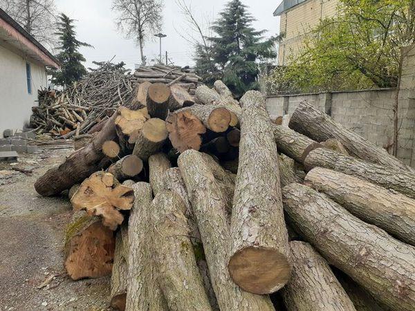 دستگیری اعضای باند قاچاق چوب از جنگلهای گلستان