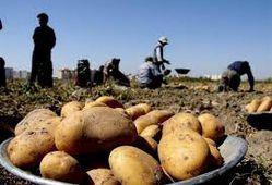 خرید توافقی سیب زمینی، ۵۰ تا ۱۰۰ تومان بیشتر از بازار از امروز در گلستان