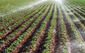 توسعه ی کشاورزی گلستان نیازمند به تکنولوژی است