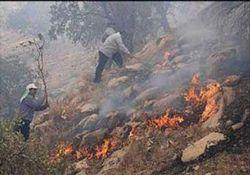 آتشسوزی در 4.5 هکتار از اراضی جنگلی پارک ملی گلستان