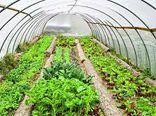 افزایش ۱۰ برابری بهره وری آب در کشت گلخانهای/ ساخت ۸۰ هکتار گلخانه در گلستان