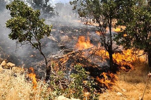 آتش زدن بقایای گیاهی جرم است/ حبس و جزای نقدی در انتظار متخلفان