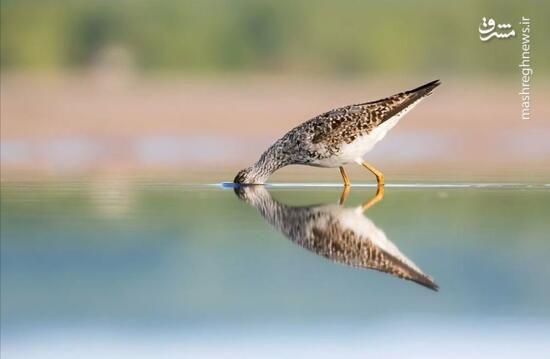 رقص زیبای پرندگان از آسمان تا دریا +فیلم