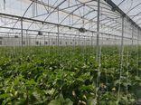 برنامه ریزی برای احداث ۱۰۰۰ هکتار گلخانه در گلستان