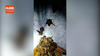فیلم / هجوم خفاشها به یک آپارتمان به دلیل سرما