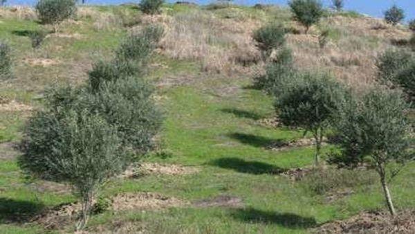 اراضی شیبدار کلاله به باغ های مثمر تبدیل می شوند