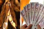 پول سویاکاران گلستانی در بانکها خاک می خورد!
