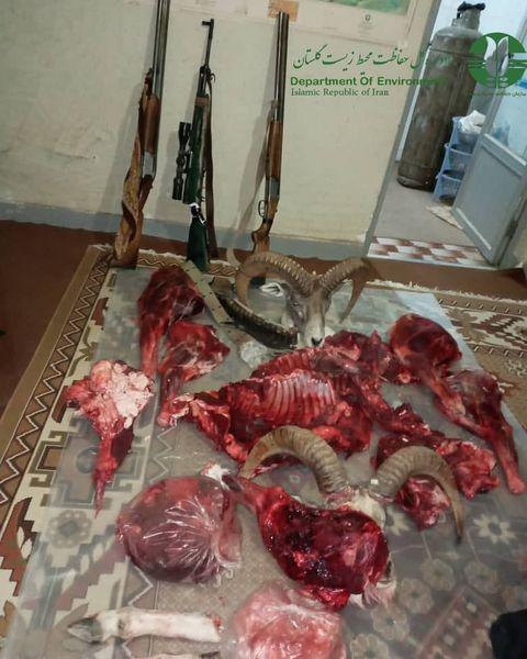 دستگیری چهار نفر شکارچی متخلف و کشف وضبط لاشه دو راس قوچ در پارک ملی گلستان