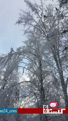 جنگل برفی گلستان (3)