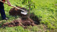 افزایش فضای سبز و درختکاری از اولویت های کاری دهیاران است
