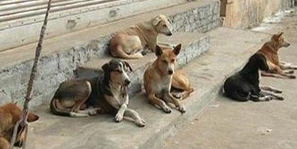 دیدگاه یک حامی حیوانات در خصوص سگ کشی