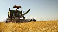 آغاز برداشت گندم در کلاله / خرید بیش از ۶۷۰۰ تن کلزا و ۲۷۰۰ تن گندم