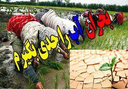 کشت 120 هزار هکتار شالی در گلستان، نوعی تاراج منابع آب شیرین و خاک گلستان است