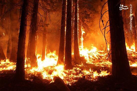 فیلم/ فرار حیوانات از میان شعلههای آتش