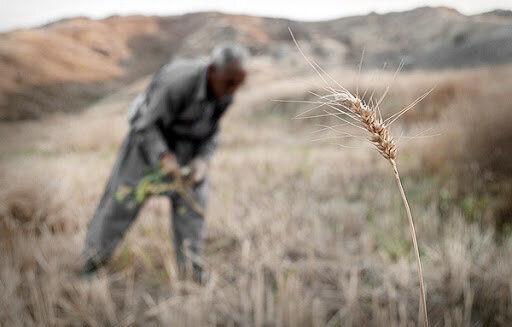 جدال کشاورزان گلستانی با تغییرات اقلیمی؛ این بار خشکسالی