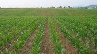 اطلاعیه جهاد کشاورزی گلستان به کشاورزان و باغداران