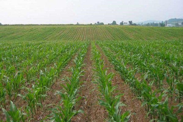 خسارت سیل به اراضی کشاورزی گلستان